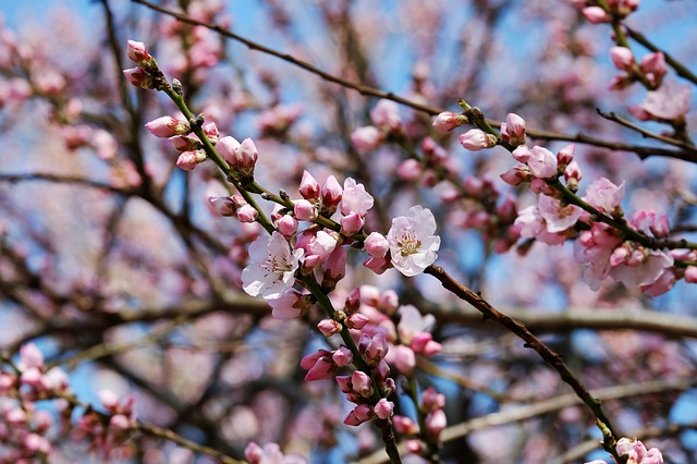 Spring Cleaning Checklists for Your Property
